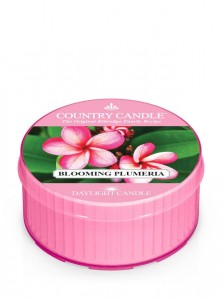 Daylight BLOOMING PLUMERIA Country Candle